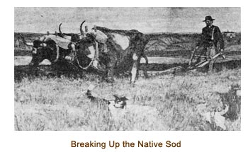 Isaac Sorensen breaking up the native sod with an ox team.